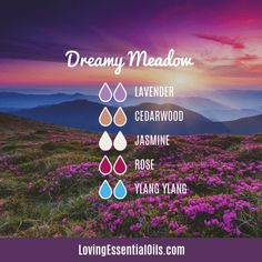 10 Rose Absolute Essential Oil Recipes - DIY Aromatherapy Blends Essential Oils For Breathing, Essential Oils For Colds, Essential Oils Guide, Essential Oil Diffuser Blends, Thyme Essential Oil Uses, Aromatherapy Oils, Young Living, Roses, Mist Diffuser