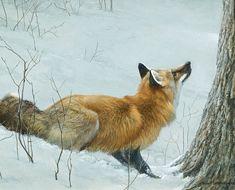Robert Bateman (1930 –Present), Fox & Maple, acrylic on board, 16 x 20 in, JHAA 2010 Sold: $69,000