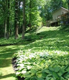7 Popular Ground Covers To Enhance Any Yard