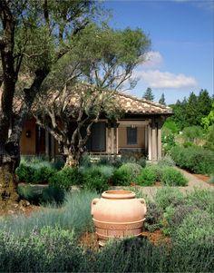 Lavender garden outside the guest house of a St. Helena, CA, farm. Saint Dizier Design.Hugh Huddleson architecture.
