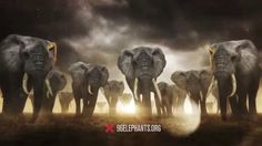 96 Elephants: Take A Stand PSA featuring Billy Joel.. I am an elephant advocate and I would love to see them for generations to come. We need to start teaching them to respect and love all nature because if we don't we will NOT have any wildlife left in the wild. Stop the hunts