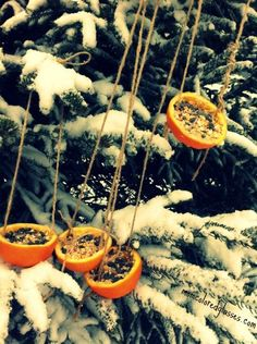 diy orange peel bird feeder