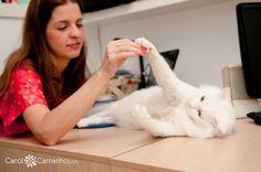 Book de Gatos Mafalda e Galileu » Carol Camanho Fotografia – Fotografia Pet (cachorro, gato, passaros, cavalos), bebes, familia, recem nascidos e gestante.