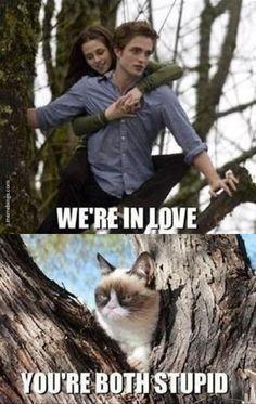 Grumpy cat burns Bella and Edward