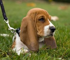 How to care for, train, and keep your 13- to 16-week-old puppy healthy.