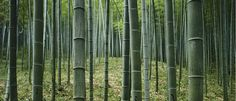 Project Drawdown ranks Bamboo as Solution #35 to mitigate and reverse the effects of climate change. Click here to learn more!