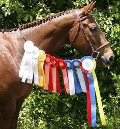 horse show ribbon winner