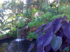 Jardins e Flores - 100374279117705905125 - Álbuns da web do Picasa