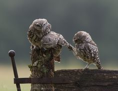 Tug of War ! The family way by Dean Mason on 500px