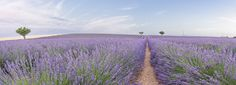 """Panoramic Provence - Photographic trip in Provence  See other photos at: <a href=""""https://www.facebook.com/fotostefanocostanzo/"""">Facebook Page</a>"""