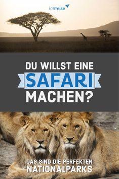 Unter den Nationalparks befindet sich auch der Serengeti National Park, in Tansania. Authentischer geht's kaum! Der älteste Nationalpark von Tansania ist weltberühmt für die jährliche Tiermigration, bei der sich eine Million  Gnus quer durch den Park in frische Weidegründe begeben, um dort ihre  Kälber zu gebären. Neben Gnus bevölkern natürlich auch Löwen, Leoparden, Elefanten, Büffel und Giraffen den Park. Uganda, Safari, Nationalparks, Wanderlust, Wale, Africa Travel, Wildlife, Animals, Group