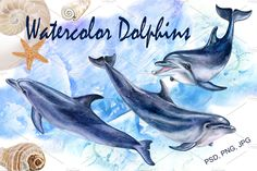This is a hand-written watercolor dolphins and sea backgrounds. Watercolor illustration perfect for designing cards, Dolphin Drawing, Dolphin Painting, Dolphin Art, Watercolor Background, Paper Background, Watercolor And Ink, Watercolor Paintings, Pencil Illustration, Graphic Design Illustration