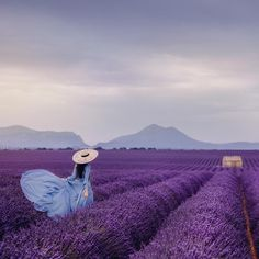 Always be on the lookout for the presence of WONDER! Lavender Cottage, Lavender Fields, Beautiful Flowers, Beautiful Pictures, Montreal Botanical Garden, Juan Les Pins, Villefranche Sur Mer, Valensole, Malva