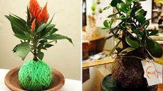 Kokedamas – Mis Jardines Garden, Outdoor, Gardening, Take Care, Plants, Garden Water Fountains, Japanese Gardens, Permaculture, Terrariums