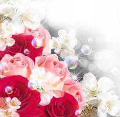 Background with Roses and White Flowers