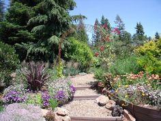 Jardines de secano. Jardín Mediterráneo