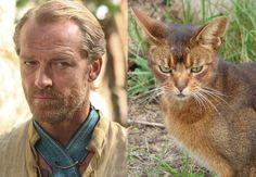 Cats of Thrones : Jorah Mormont