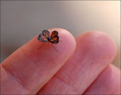 perfect tiny butterfly...