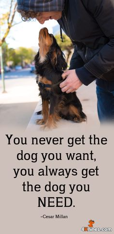 You always get the dog you need!