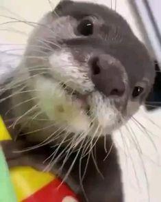 Cute Kawaii Animals, Baby Animals Super Cute, Like Animals, Cute Little Animals, Cute Funny Animals, Animals And Pets, Otters Cute, Baby Otters, Cute Animal Videos