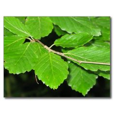 Forest Leaves Post Card. Click to buy from my Zazzle store.
