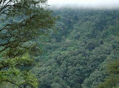 Calilegua National Park, Jujuy, Argentina. Argentina, por vos. | Instituto Nacional de Promoción Turística More information: http://www.parquesnacionales.gob.ar/areas-protegidas/region-noroeste/pn-calilegua/