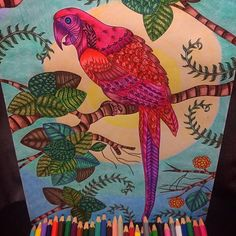 #MyObraNumero59 #LightAndShade #ObraSanctuario #Obra #AdultColoringBook #ArtOfTheDay #HeartInArt #ArtIsMyPassion #ArtistInsideMe #HappyColoring #ColoringTribe #ColorYourLife #ColoringHobby #ColoringTherapy #CalmInColors #LifeOfColors #BeautifulColoring #Parrot #BirdParadise #fabercastell #Watercolorpencils #CreatedWithPassion #PassionInArt #ArtSession