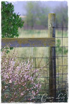 Awesome Recipe for Fences