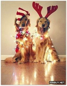 Our doggies at Christmas. jj