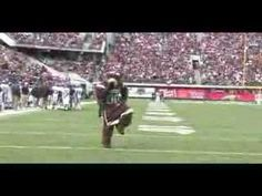 Video of Monte Bear. Nothing like him #montana #grizzlies