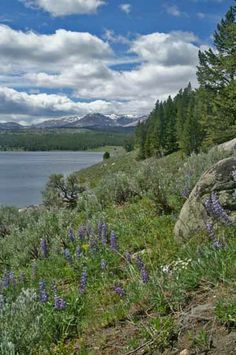 Meadowlark Lake-Big Horn Mountains We have been there numerous times. Its so peaceful