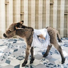 The Cutest Creatures I've Ever Seen In One Place #babyanimal #cuteanimal 135+ Cute Baby Animal | Are You Sure Your Heart Can Handle This Cutest One ?