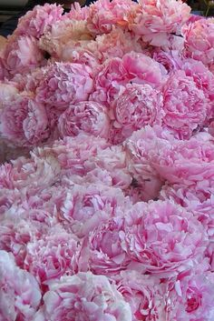 A sea of peonies