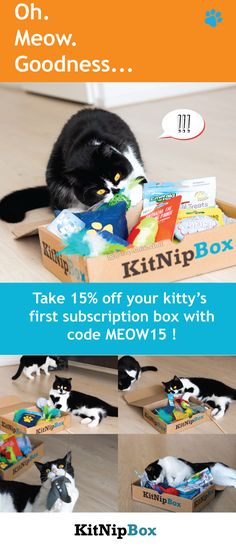 KitNipBox is a monthly themed box of toys, treats, and PURRS! Sign up today at http://kitnip.com/pinterest.