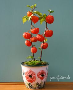 """Über 1.000 Ideen zu """"Lampionblume auf Pinterest Herbstdeko ..."""