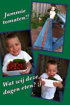 Trotse Aaron met de tomatenoogst