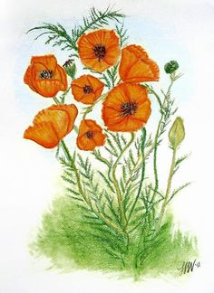 Original Illustration Pastel Drawing Floral Botanical Art by Laurie Wilt Walker