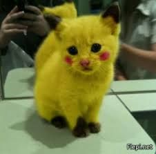 Pikachu dans la vrai vie WTF ???