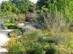 California Native Garden Plant List