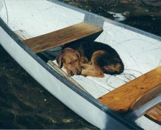 Airedale Terrier puppy taking a nap in a little boat✨