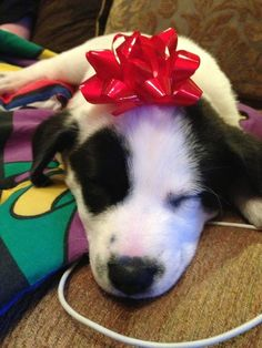 """""""You're trying to say that I'M the present this year?? Funny joke. Now hand over my stocking snackies."""" 
