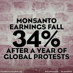 Monsanto said its earnings fell 34% in its first fiscal quarter, as South American farmers cut back on planting corn, reducing demand for the company's biotech-enhanced seeds.