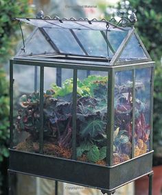 "Another terrarium container. I read an article about a new book called ""The New Terrarium: Creating Beautiful Displays for Plants and Nature"" in Better Homes and Gardens. I think I could really love this kind of gardening. This image is from the book."