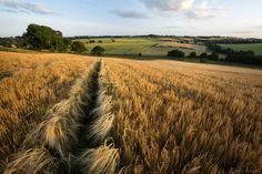 A rural view - near Terrington, North Yorkshire, England