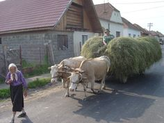 If you travel in Romania you cannot miss Transilvania travel, Danube Delta or going on tours in Romania's northern part. Find out which are the must see sights. Mode Of Transport, Culture Travel, Best Memories, Cattle, Romania, Equestrian, Pony, Around The Worlds, Tours