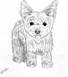 Coloring Pages Yorkie Coloring Pages
