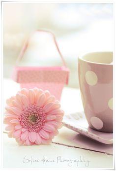 Lovely pink flower.
