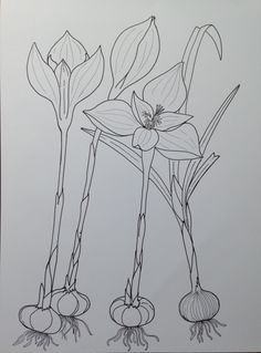 Flower Sketches, Flowers, Flower Drawings, Royal Icing Flowers, Flower, Florals, Floral, Blossoms