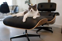 Charlie & Eames Lounge Chair. by goodiesphoto, via Flickr