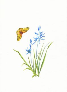 Camas and fritillary butterfly
